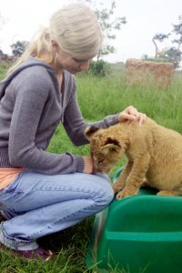 Lion kisses at the Lion and Rhino Park in South Africa
