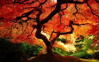 orange tree of life